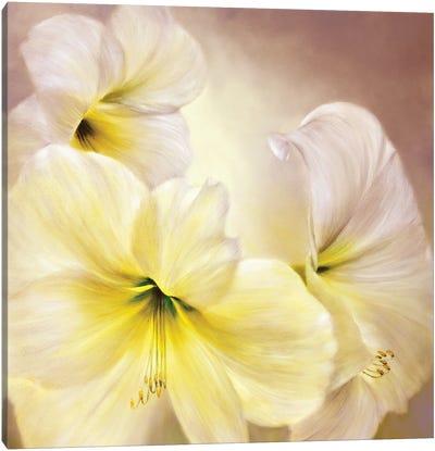 White Amaryllis Canvas Art Print