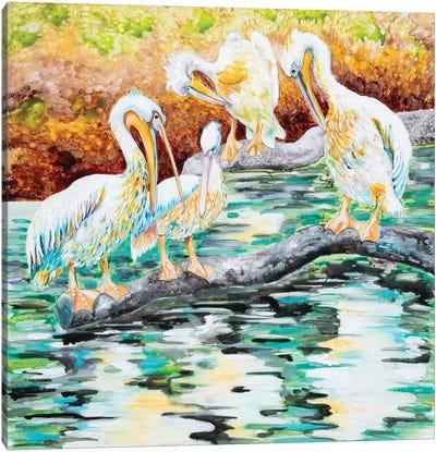 Pelicans Canvas Art Print