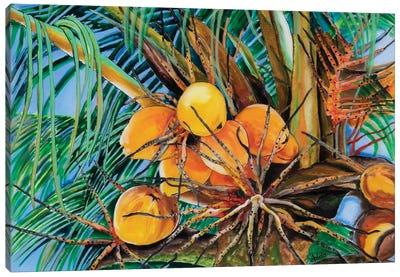 Coconuts Canvas Art Print