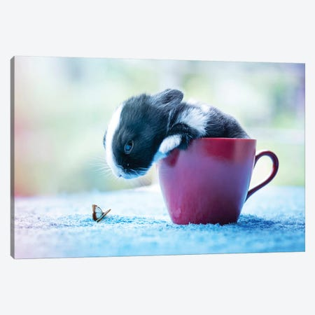 Hello! Canvas Print #ASR12} by Ashraful Arefin Canvas Print