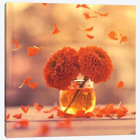 Marigold Days Canvas Print #ASR21} by Ashraful Arefin Canvas Wall Art