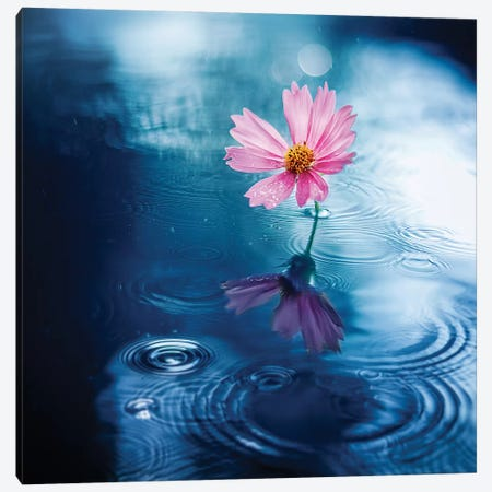 Purity Canvas Print #ASR23} by Ashraful Arefin Canvas Artwork