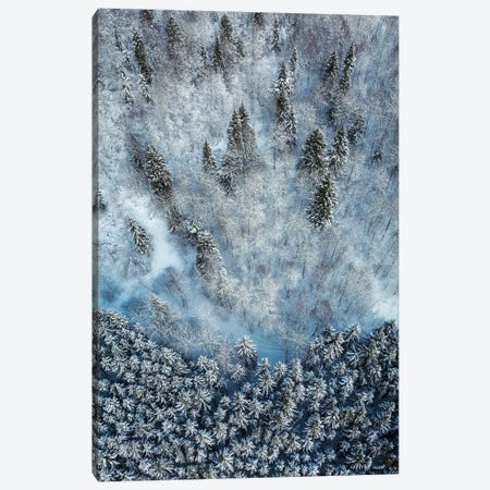 Snowy Forest Aerial Canvas Print #ASV1} by Anton Shvain Canvas Artwork