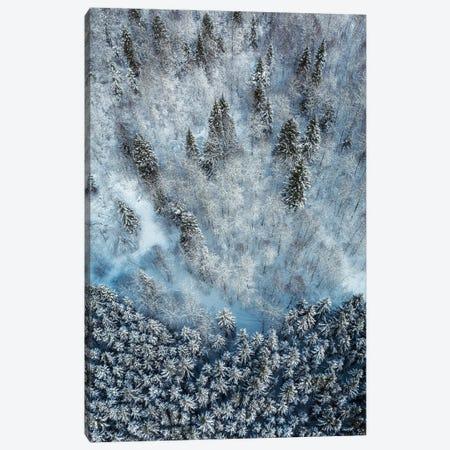 Snowy Forest Aerial Canvas Print #ASV1} by Anton Shvain Canvas Artwork
