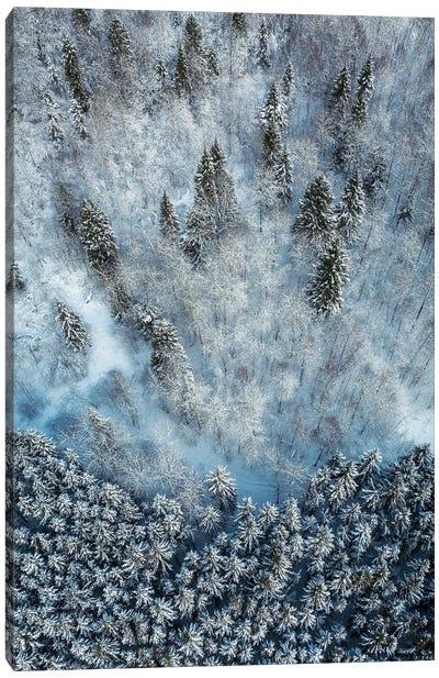 Snowy Forest Aerial Canvas Art Print