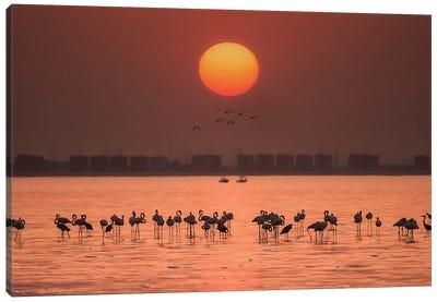 Remarkable Sunset Canvas Art Print