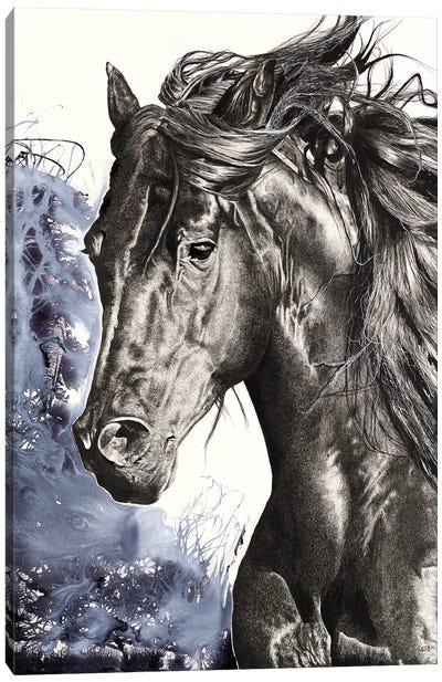 Wild Horse Canvas Art Print