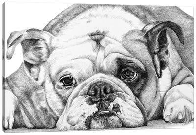 English Bulldog Canvas Art Print