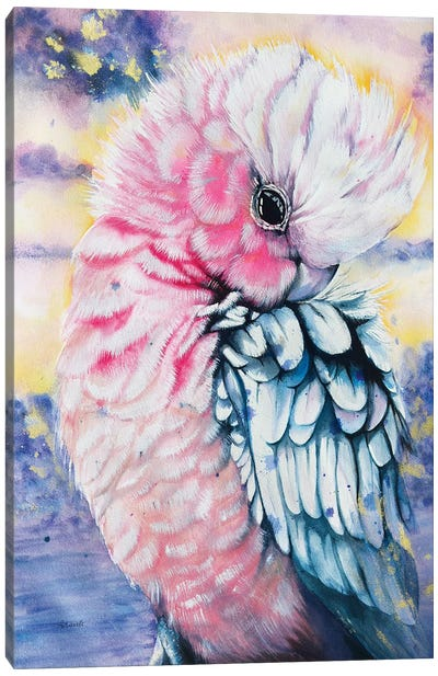Pink Galah Watercolor Canvas Art Print