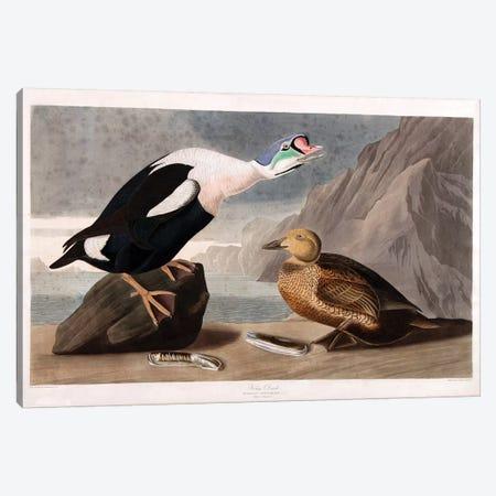 King Duck Canvas Print #AUD3} by John James Audubon Art Print
