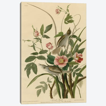 Seaside Finch Canvas Print #AUD6} by John James Audubon Canvas Art
