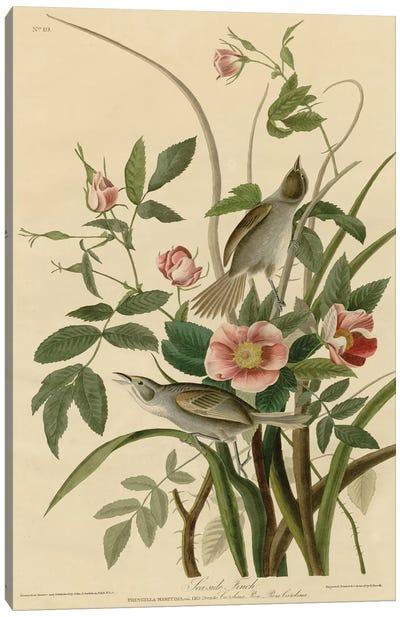 Seaside Finch Canvas Art Print