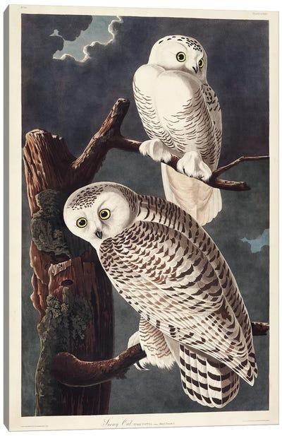 Pl 121 Snowy Owl Canvas Art Print