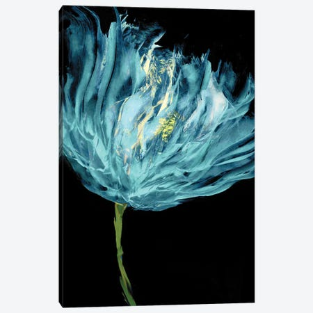 Aqua Tulips I Canvas Print #AUS38} by Vanessa Austin Canvas Art