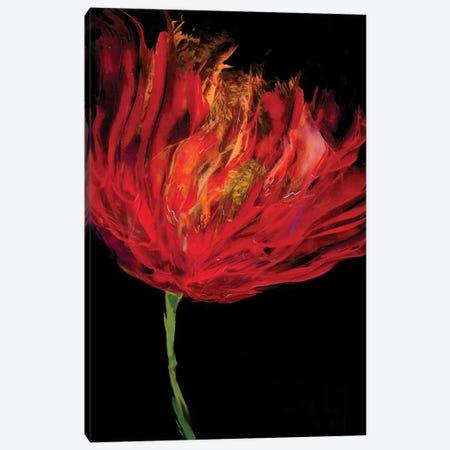 Red Tulips I Canvas Print #AUS40} by Vanessa Austin Canvas Print