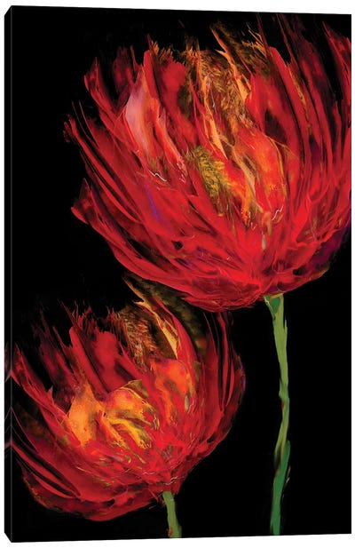 Red Tulips II Canvas Art Print