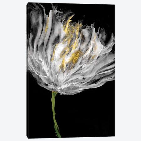 Tulips on Black I Canvas Print #AUS42} by Vanessa Austin Canvas Art Print