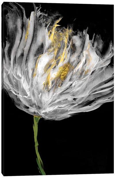 Tulips on Black I Canvas Art Print