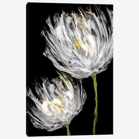 Tulips on Black II Canvas Print #AUS43} by Vanessa Austin Canvas Art Print