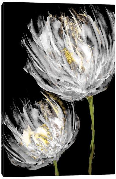 Tulips on Black II Canvas Art Print