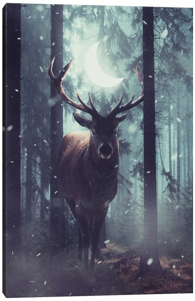 Forest Dweller Canvas Art Print