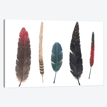 Feathers I Canvas Print #AVC12} by Ana Victoria Calderón Canvas Artwork