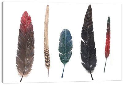 Feathers I Canvas Art Print