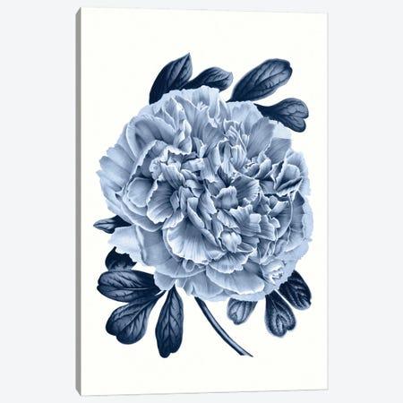 Vintage Blue Botanical V Canvas Print #AVN10} by Amelie Vintage Co Art Print
