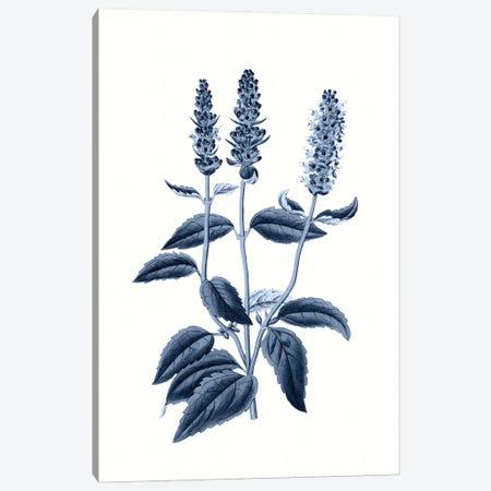 Vintage Blue Botanical VI Canvas Print #AVN11} by Amelie Vintage Co Canvas Art Print