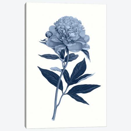 Vintage Blue Botanical VII Canvas Print #AVN12} by Amelie Vintage Co Canvas Print