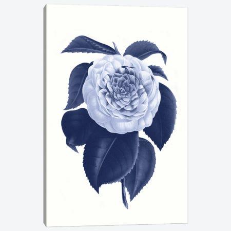 Vintage Blue Botanical IX Canvas Print #AVN14} by Amelie Vintage Co Canvas Wall Art