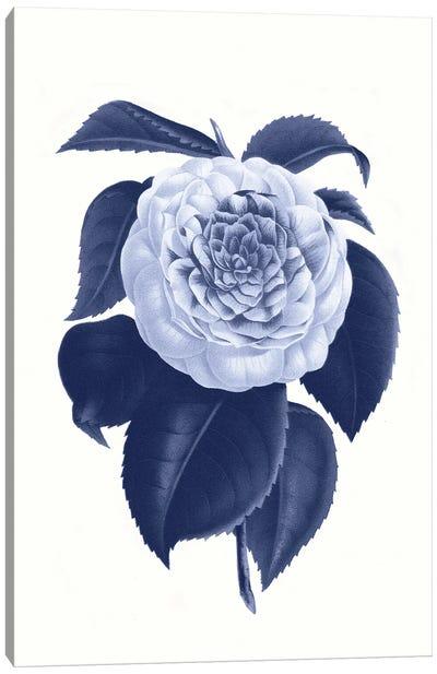 Vintage Blue Botanical IX Canvas Art Print