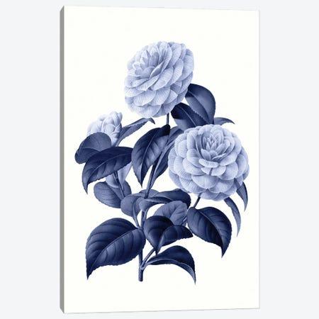Vintage Blue Botanical X Canvas Print #AVN15} by Amelie Vintage Co Canvas Art