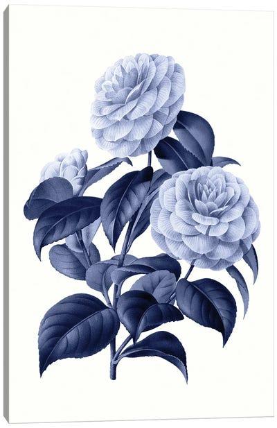 Vintage Blue Botanical X Canvas Art Print