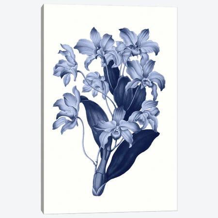 Vintage Blue Botanical XI Canvas Print #AVN16} by Amelie Vintage Co Canvas Wall Art