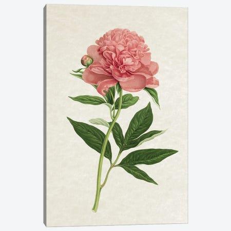 Vintage Rose Canvas Print #AVN26} by Amelie Vintage Co Canvas Art Print