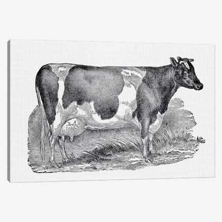 Dairy Cow Canvas Print #AVN41} by Amelie Vintage Co Canvas Artwork