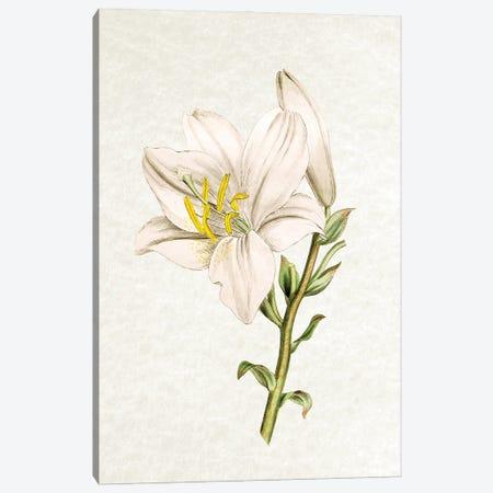 Lily Canvas Print #AVN47} by Amelie Vintage Co Canvas Art Print