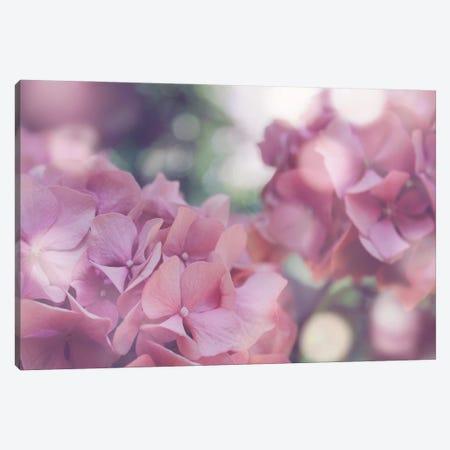 Pastel Hydrangeas I Canvas Print #AVN69} by Amelie Vintage Co Canvas Artwork