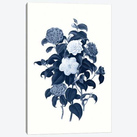 Vintage Blue Botanical II Canvas Print #AVN6} by Amelie Vintage Co Canvas Print