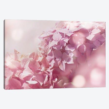 Pastel Hydrangeas II Canvas Print #AVN70} by Amelie Vintage Co Canvas Art Print