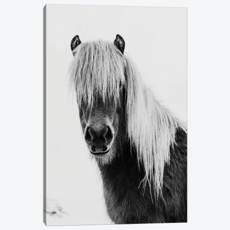 Wild Pony Canvas Print #AVN71} by Amelie Vintage Co Canvas Print