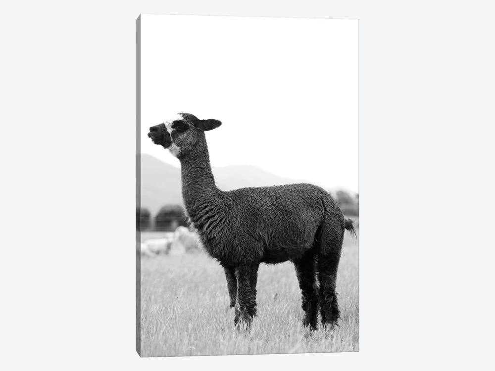 Black And White Alpaca by Amelie Vintage Co 1-piece Canvas Wall Art