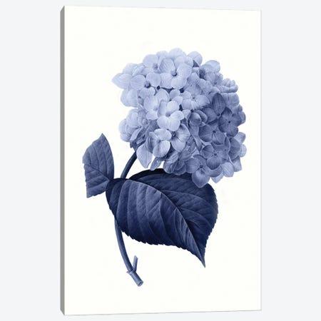 Vintage Blue Botanical I Canvas Print #AVN7} by Amelie Vintage Co Canvas Art Print