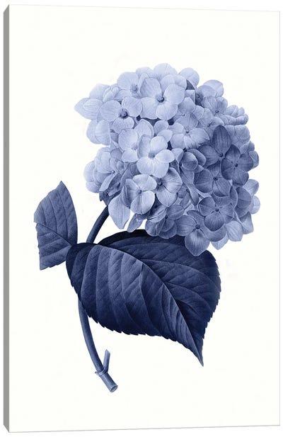 Vintage Blue Botanical I Canvas Art Print