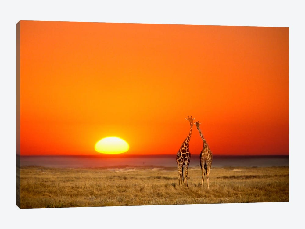 Giraffe Couple, Etosha National Park, Namibia by Janis Miglavs 1-piece Canvas Artwork