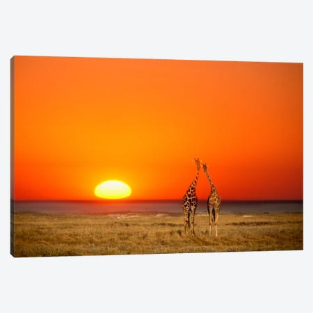 Giraffe Couple, Etosha National Park, Namibia Canvas Print #AVS1} by Janis Miglavs Canvas Artwork