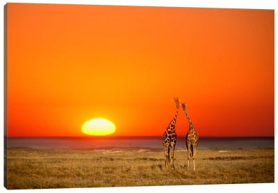 Giraffe Couple, Etosha National Park, Namibia Canvas Art Print