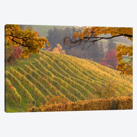 Autumn Vineyard Landscape, Newberg, Yamhill County, Oregon, USA Canvas Print #AVS4} by Janis Miglavs Canvas Print