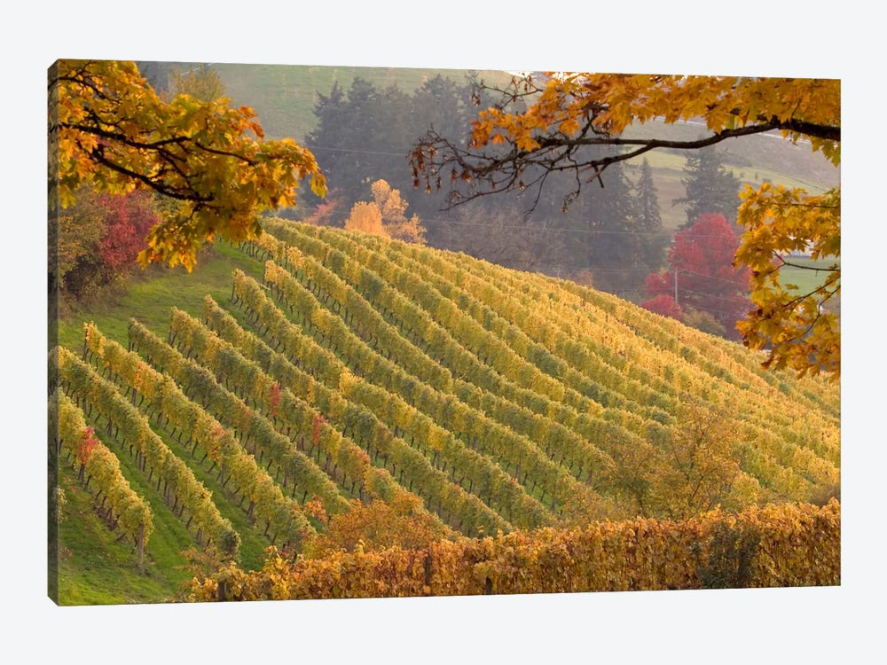 Autumn Vineyard Landscape, Newberg, Yamhill County, Oregon, USA by Janis Miglavs 1-piece Canvas Print